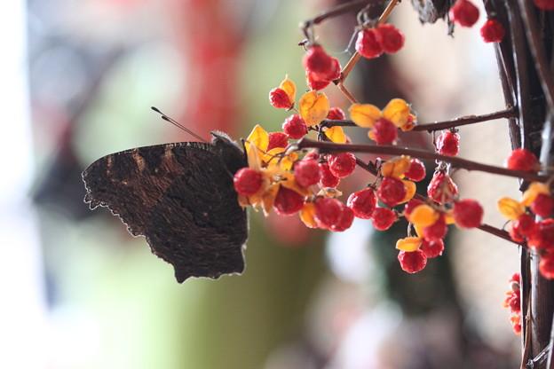 Photos: 春一番乗り。