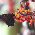 写真: 春一番乗り。