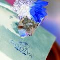 青い福寿草^^