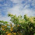 写真: 秋空