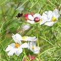Photos: 花粉一杯。