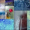 写真: 窓霜