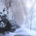 Photos: 濃霧の朝