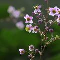 Photos: 小花と水滴