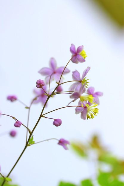 押し花の様に^^
