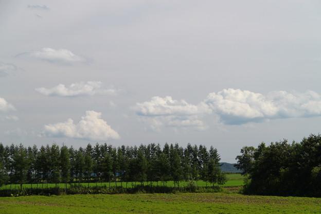 若い防風林