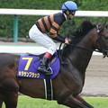 写真: キタサンブラック 返し馬(第75回 皐月賞)