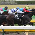 写真: エネスク レース(15/10/17・プラタナス賞)