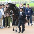 写真: エネスク_1(15/10/17・プラタナス賞)