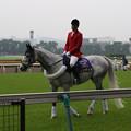写真: 東京競馬場 誘導馬・レンディル_1(15/05/09)