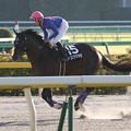 写真: ドコフクカゼ 返し馬(15/10/25・ブラジルカップ)