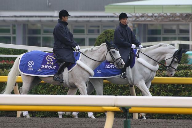 写真: 東京競馬場 誘導馬_1(15/10/17)