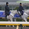 Photos: 東京競馬場 誘導馬_1(15/10/17)