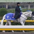写真: 東京競馬場 誘導馬_2
