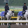 写真: 東京競馬場 誘導馬_3(15/10/17)