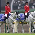 写真: 東京競馬場 誘導馬_6(15/10/17)