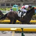 写真: ホッコーヴァール  レース(15/05/23・2R)