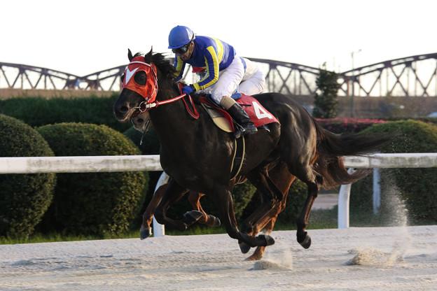 写真: ウエスタンレオーネ レース(15/12/30・11R)