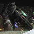 写真: ニューカツタロー  レース(17/11/25・6R)