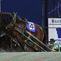 写真: ホクトウォーカー レース(17/11/25・5R)
