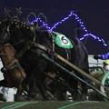 写真: オーシャンスター  レース(17/11/26・5R)