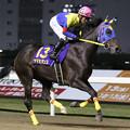 写真: ヤマミダンス 返し馬(17/11/08・第28回 ロジータ記念)