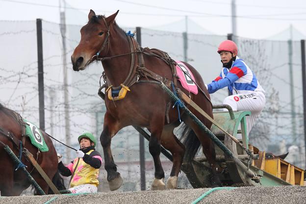 写真: キタイヒメ レース(17/11/26・1R)