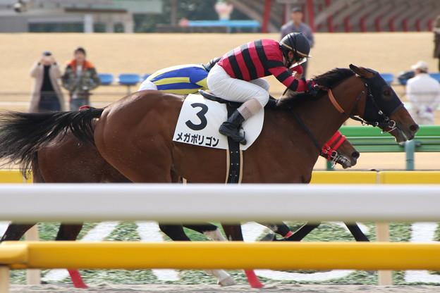 写真: メガポリゴン レース(17/02/05・1R)