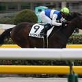 写真: ダイワエトワール  レース(17/02/05・3R)
