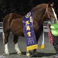 写真: オイドン 引退式_1(17/11/26・帯広競馬場)