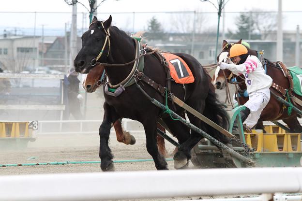 オレノココロ レース_1(13/03/16・5R)