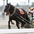 写真: オレノココロ レース_1(13/03/16・5R)