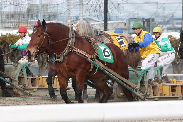 写真: マツノビューティ レース_1(18/01/20・5R)