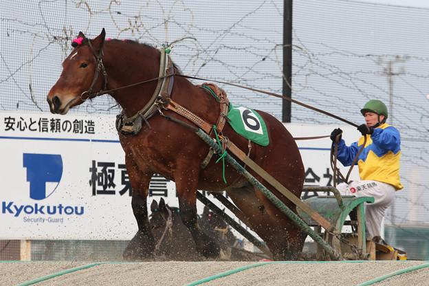 マツノビューティ レース_2(18/01/20・5R)