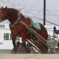 写真: マツノビューティ レース_2(18/01/20・5R)