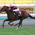 写真: アルバート レース(17/12/02・第51回 スポーツニッポン賞ステイヤーズステークス)