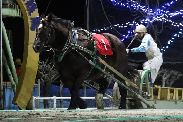 写真: アアモンドセブン レース(18/01/21・第28回 ヒロインズカップ)