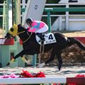 写真: マリノディアナ レース(17/12/17・1R)