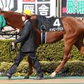ハッピーグリン パドック(18/01/28・セントポーリア賞)