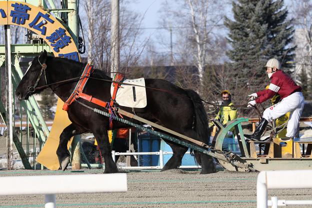 写真: カネサダイマオー レース(18/01/21・3R)