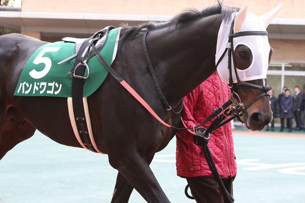 写真: バンドワゴン パドック_1(17/12/09・第53回 中日新聞杯)