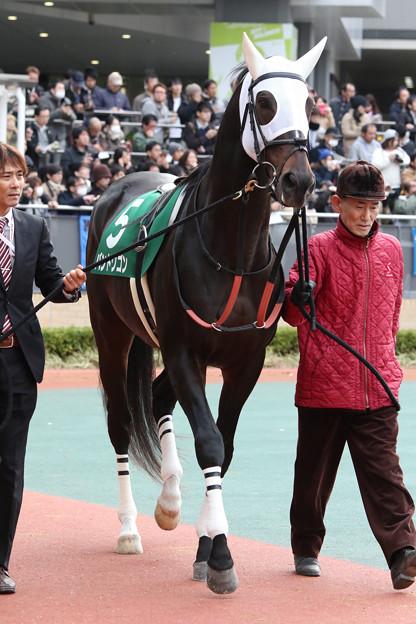 バンドワゴン パドック_2(17/12/09・第53回 中日新聞杯)