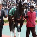 写真: バンドワゴン パドック_2(17/12/09・第53回 中日新聞杯)