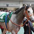 写真: マウントロブソン パドック(17/12/09・第53回 中日新聞杯)