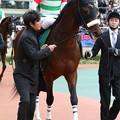 写真: メートルダール パドック_2(17/12/09・第53回 中日新聞杯)