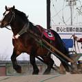 写真: ゴールデンフジ レース_2(18/01/21・6R)
