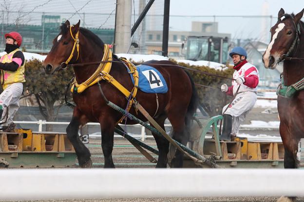 写真: アカフジ レース_1(18/01/20・6R)