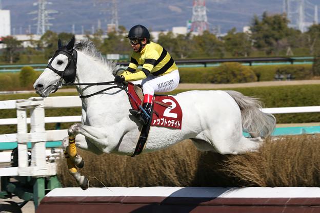 アップトゥデイト レース_2(18/03/10・第20回 阪神スプリングジャンプ)