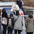 笠松競馬場 誘導馬・ウイニー_4(17/12/29)