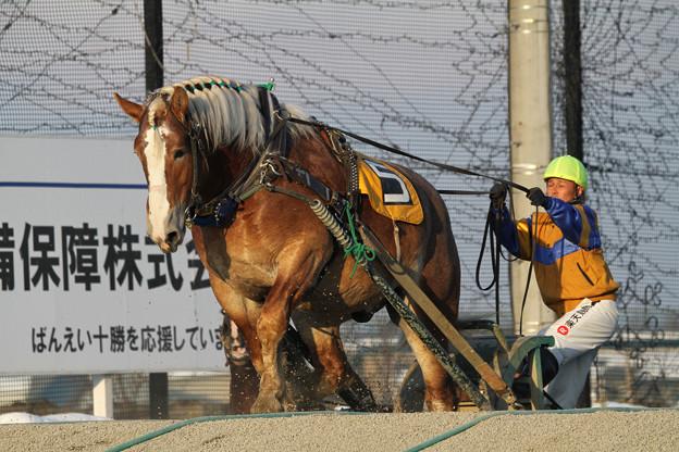 ノエルブラン レース_1(18/03/03・7R)
